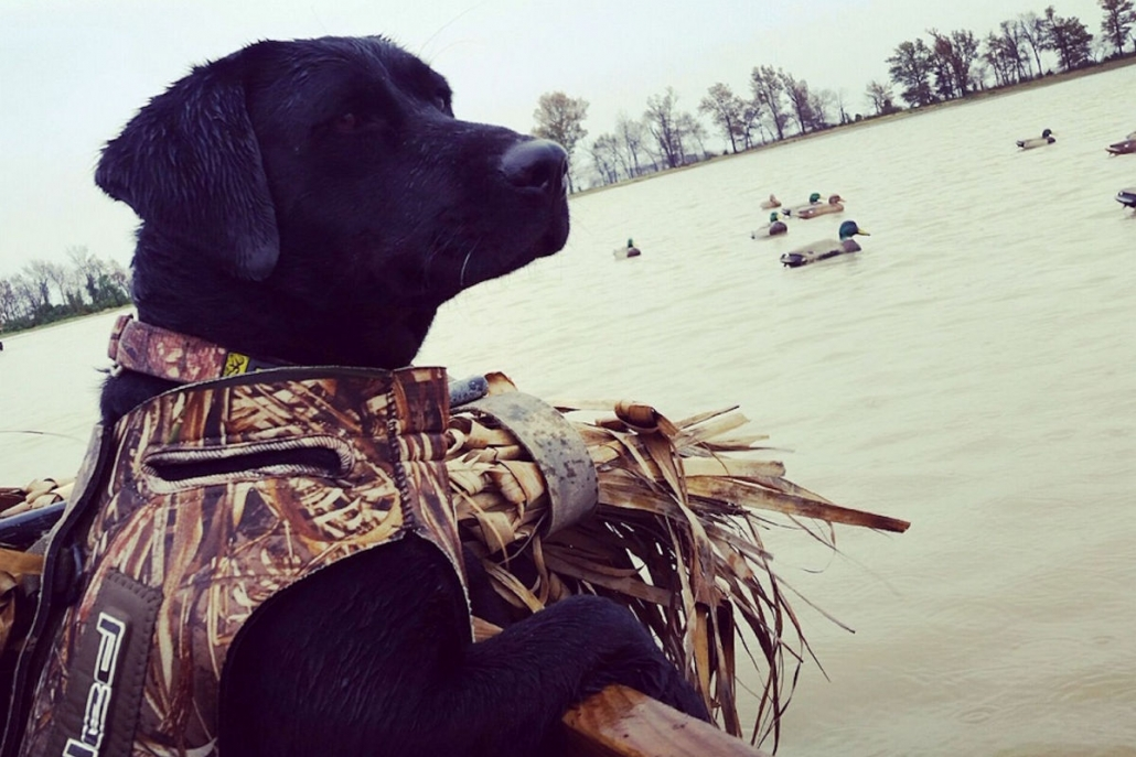 Missouri Waterfowl Hunting | Duck Hunting Missouri